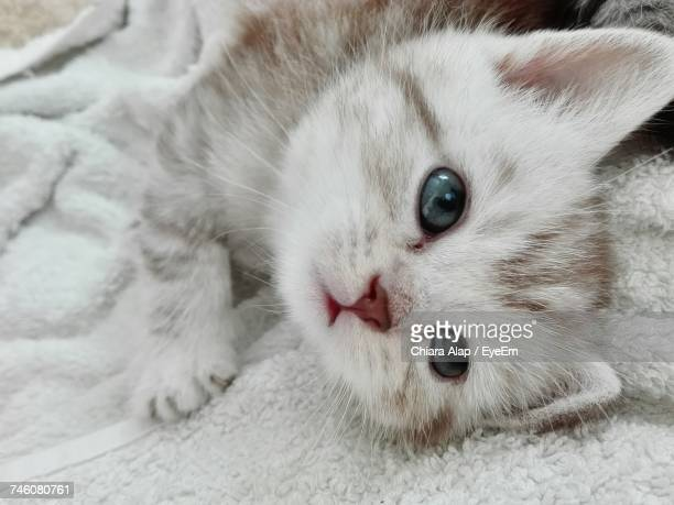 Close-Up Of Kitten Looking Away While Lying On Bed