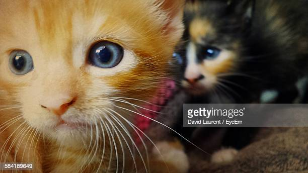 Close-Up Of Kittens