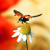 Close-up of ladybird flying over flower