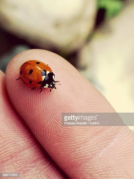 Close-Up Of Ladybug On Human Finger