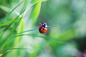 Close-Up Of Ladybug Perched On Grass