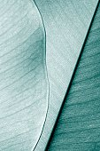Close-up of layered leaves.