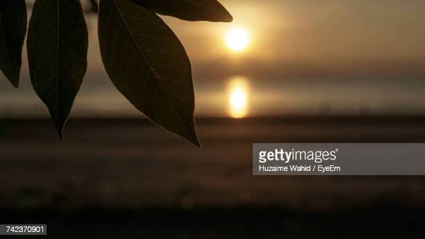 Close-Up Of Leaf Against Sky During Sunset