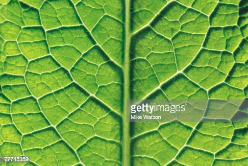 Close-Up of Leaf : Stock-Foto