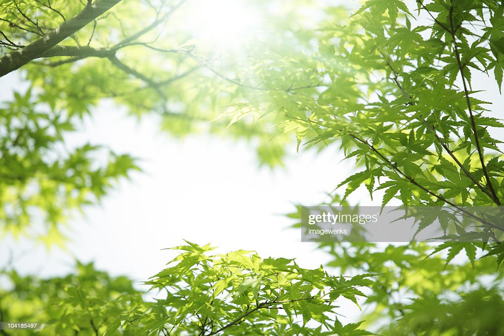 Close-up of leaves on a sunny day : Stock Photo