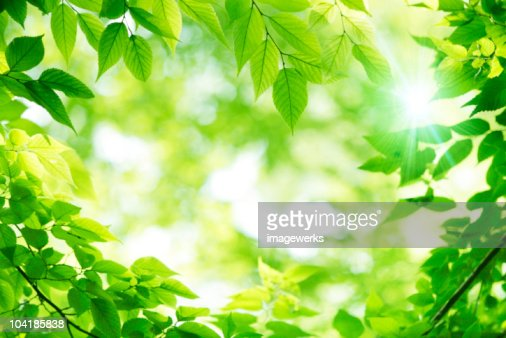 Close-up of leaves on a sunny day