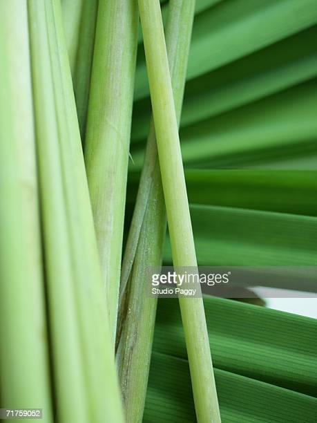Close-up of lemon grass