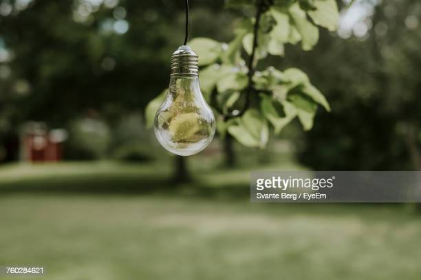 Close-Up Of Light Bulb Hanging In Yard