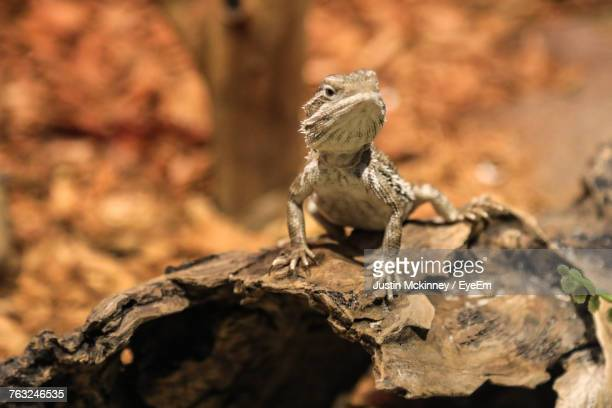Close-Up Of Lizard Sitting Outdoors