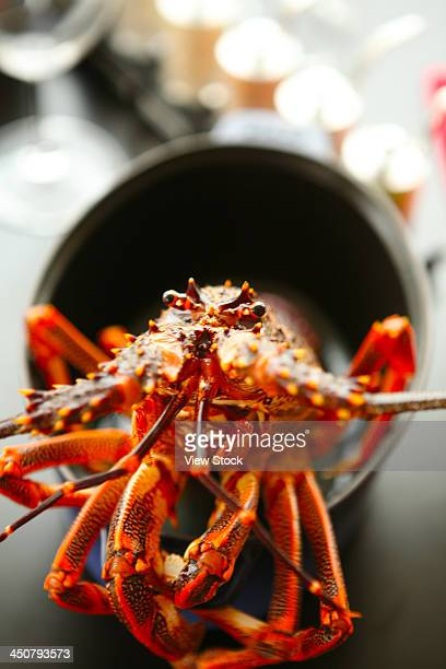 Close-up of lobster