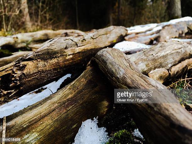 Close-Up Of Logs On Forest Ground