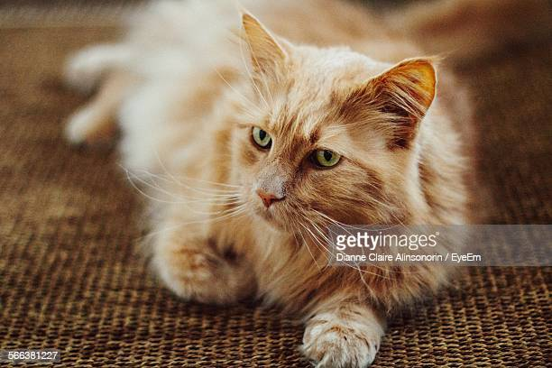 Close-Up Of Maine Coon Lying On Textile At Home