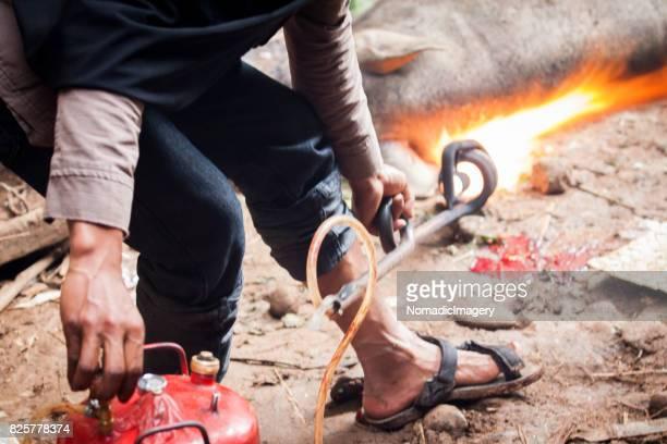 Close-up of man blow torching a sacrificed pig