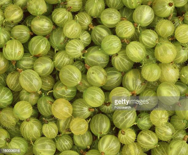 Close-up of many gooseberries
