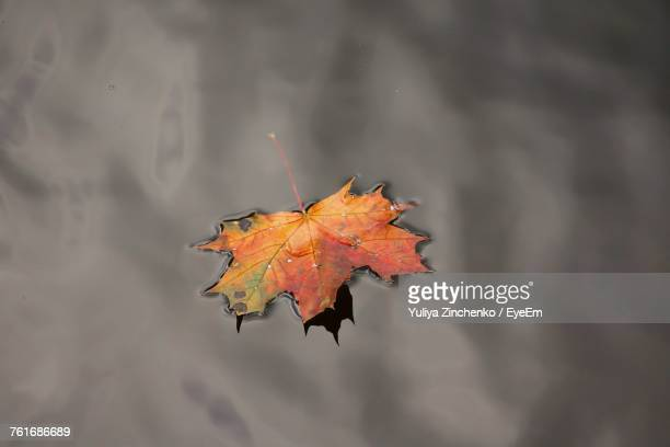 Close-Up Of Maple Leaf On Water
