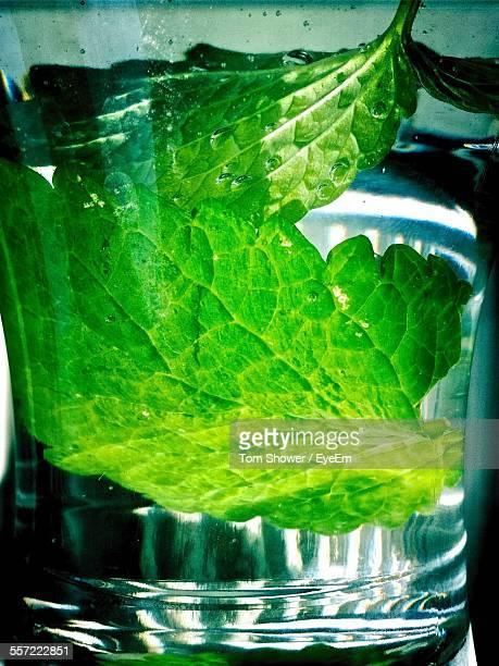 Close-Up Of Mint Leaf In Drinking Glass