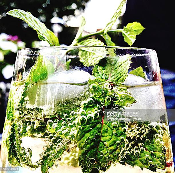Close-Up Of Mint Leaves In Drink
