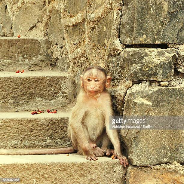 Close-Up Of Monkey Sitting On Staircase
