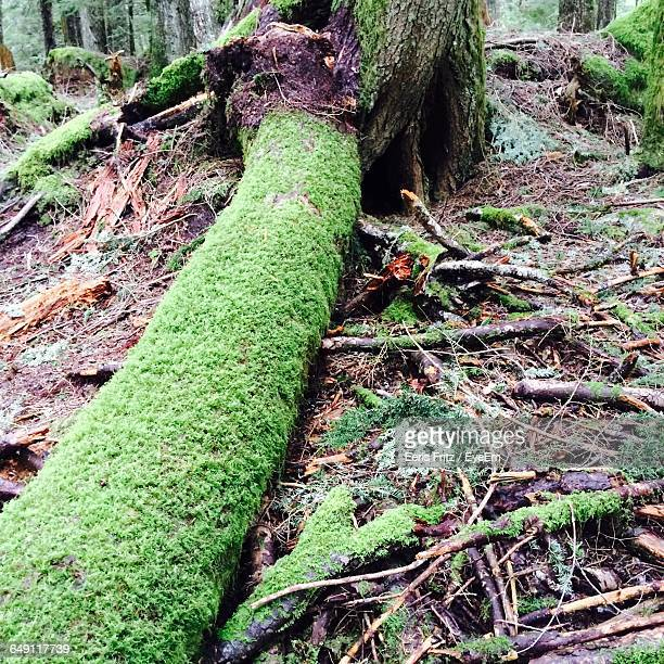 Close-Up Of Moss Growing On Log In Forest