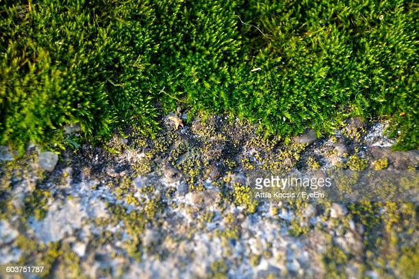 Close-Up Of Moss Growing On Wall
