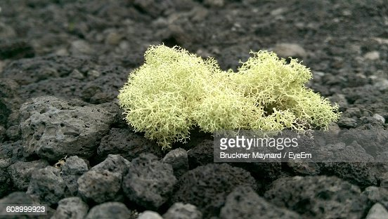 Close-Up Of Moss On Rocks : Stock Photo