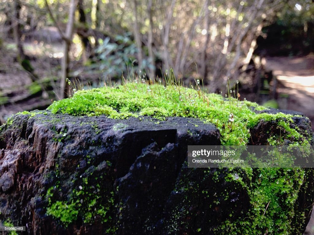 Close-Up Of Moss Rocky Surface