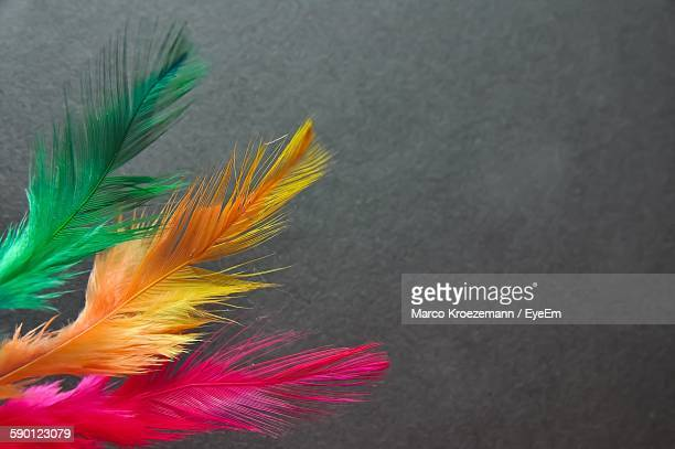 Close-Up Of Multi Colored Feathers Against Wall