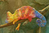 A colorful chameleon lying on a tree branch.  The chameleon's textured skin features patterns in vibrant yellow, blue and red colors.  In the background is a rock face.