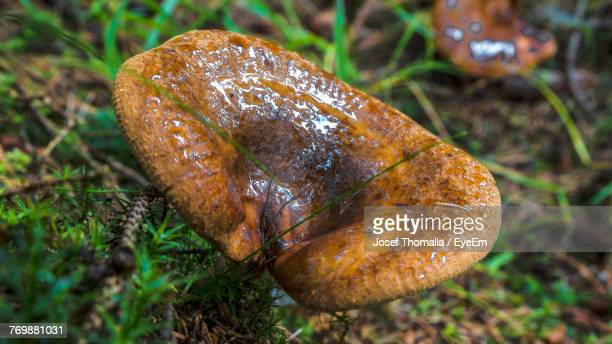 Close-Up Of Mushroom Growing On Field In Forest
