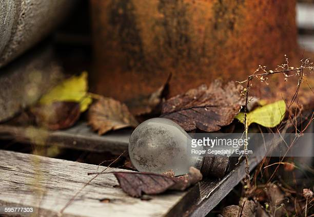 Close-Up Of Old Electric Bulb And Leaves On Table