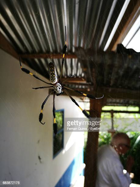 Close-Up Of Orb Spider
