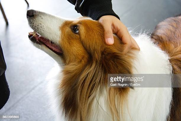 Close-Up Of Person Hand Stroking Dog