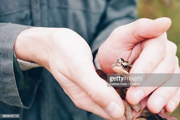 Close-Up Of Person Holding Frog Outdoors