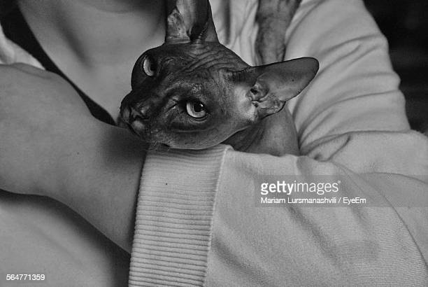 Close-Up Of Person Holding Sphynx