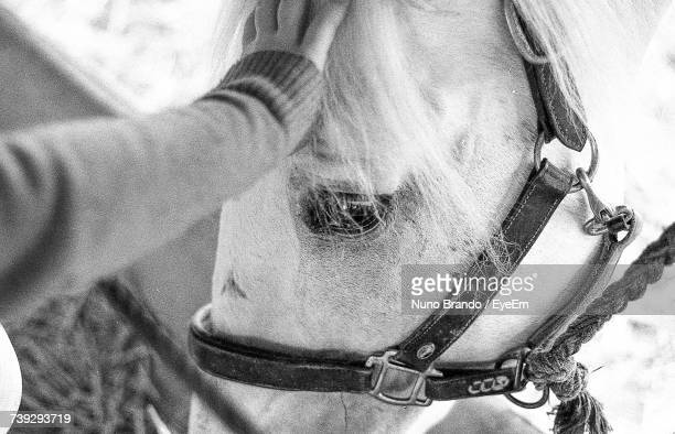 Close-Up Of Person Stroking Horse