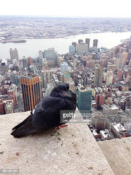 Close-Up Of Pigeon On Roof Against Cityscape