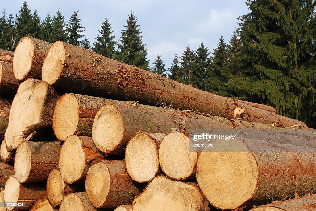 Close-up of piles of hopped wood logs in the forest : Stock Photo