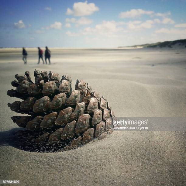 Close-Up Of Pine Cone At Sandy Beach With People In Background