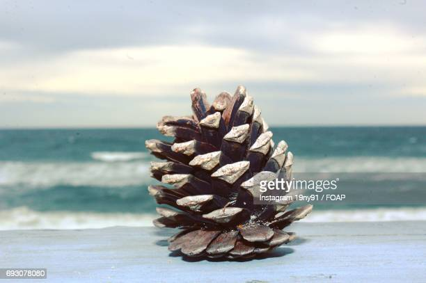 Close-up of pine cone near sea