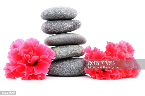 Close-Up Of Pink Flowers With Pebbles