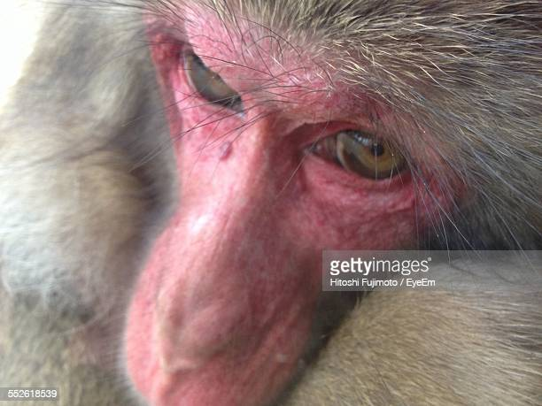 Close-Up Of Pink Monkey Face