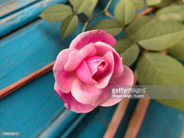 Close-Up Of Pink Rose By Wood