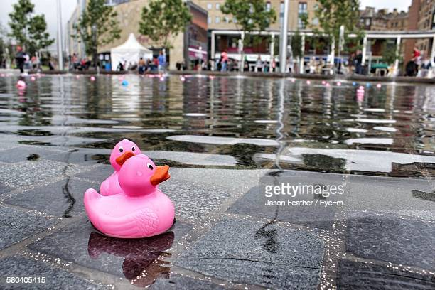 Close-Up Of Pink Rubber Ducks On Swimming Pool