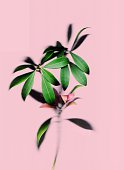 Close-Up Of Plant Against Pink Background
