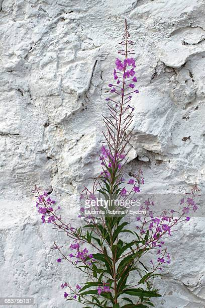 Close-Up Of Plant Against The Wall