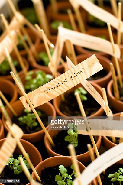 A close-up of planted party favors