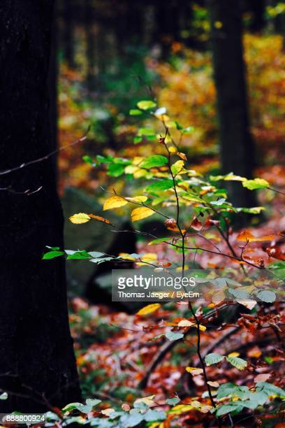 Close-Up Of Plants In Forest During Autumn