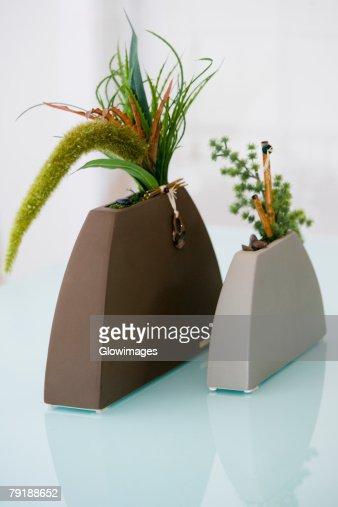 Close-up of plants in vases : Foto de stock