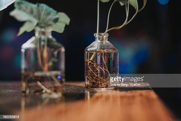 Close-Up Of Plants On Wooden Table