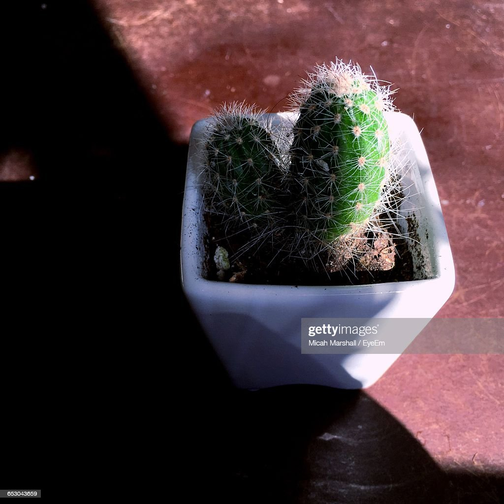 Close-Up Of Potted Cactus On Table